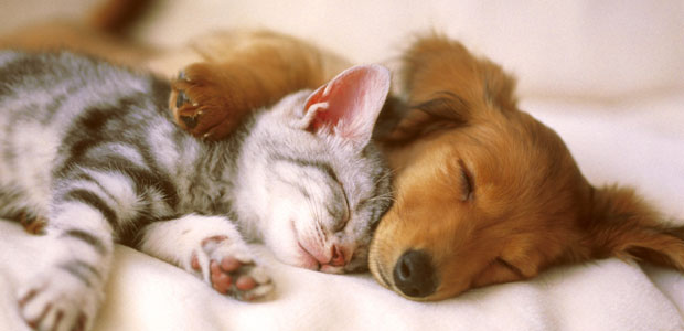 cane-gatto_ev